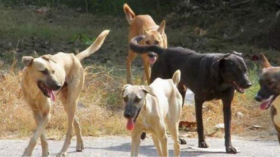 Δήμος Αγρινίου: Δεν θα ανεχθούμε παράνομες μετακινήσεις ζώων