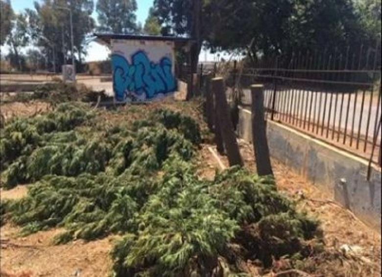 """Ναύπακτος: """"έκοψαν εν μια νυκτί 48 κυπαρισσοειδή δένδρα"""""""
