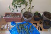 Ευρυτανία: Δύο συλλήψεις για καλλιέργεια χασίς στα Άγραφα