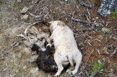 Θανάτωσαν με φόλες τέσσερα σκυλιά στο Βασιλόπουλο