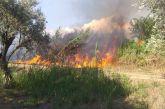 Δύο εστίες φωτιάς απείλησαν λιοστάσια στο Καινούργιο (φωτο – βίντεο)
