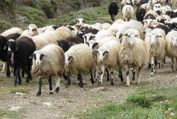 Λαϊκή Συσπείρωση Δυτικής Ελλάδας: Απροστάτευτοι οι κτηνοτρόφοι στον καταρροϊκό πυρετό
