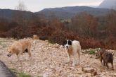 Επίθεση από αδέσποτα τσοπανόσκυλα δέχτηκαν περιηγητές στον Δρυμώνα Θέρμου