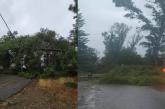 Κακοκαιρία «Ιανός»: Πτώσεις δένδρων σε Κατοχή, Νεοχώρι, Αστακό (φωτο)