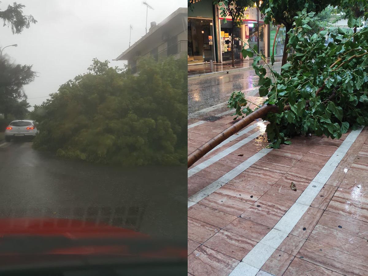 Πτώσεις δένδρων στο Αγρίνιο