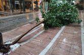 Πτώση δένδρου στο κέντρο του Αγρινίου