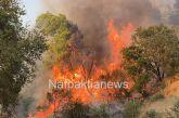 Μεγάλη πυρκαγιά στο Τρίκορφο Ναυπακτίας-καίγεται πευκόδασος