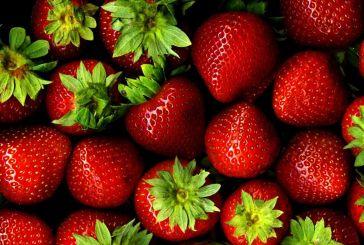Αίτημα ενίσχυσης για την προώθηση της φράουλας στις αγορές της Γερμανίας και της Πολωνίας