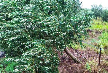 Μεγάλες ζημιές στις καλλιέργειες της Παραχελωίτιδας από τον «Ιανό» (φωτο)