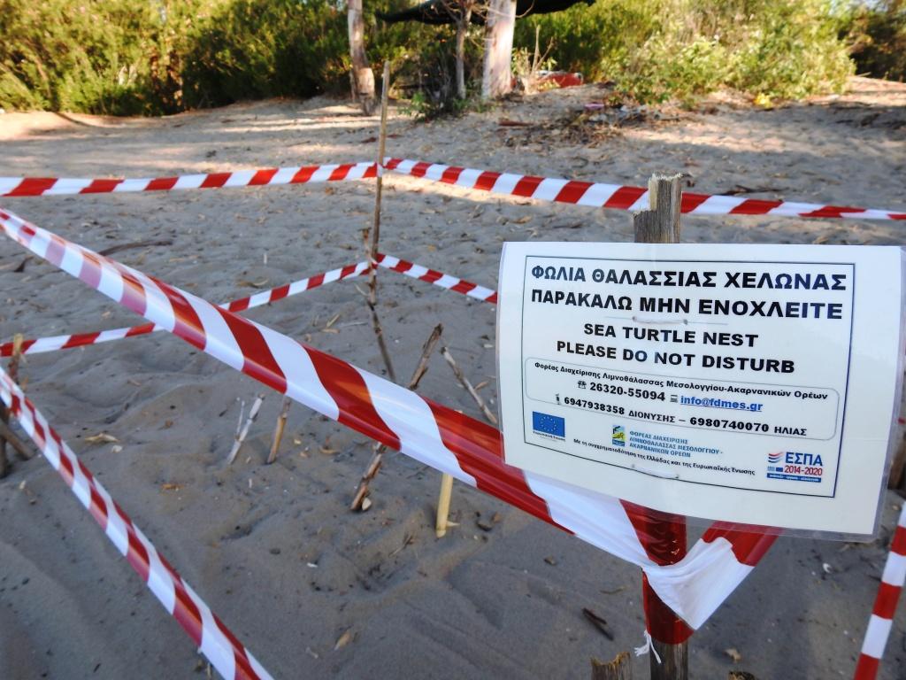 Τα πρώτα χελωνάκια Caretta caretta του Εθνικού Πάρκου Λιμνοθαλασσών Μεσολογγίου-Αιτωλικού