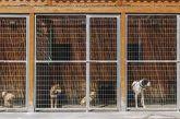 Καταφύγιο αδέσποτων ζώων στη Στράτο θα κατασκευάσει ο Δήμος Αγρινίου