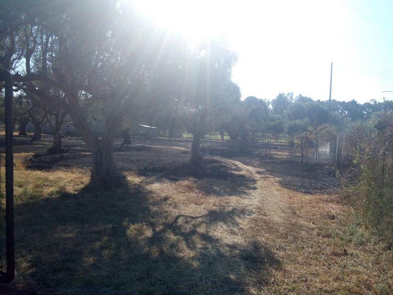 Άμεση επέμβαση της Πυροσβεστικής σε πυρκαγιά σε λιοστάσι στο Ξηροπήγαδο Ναυπακτίας