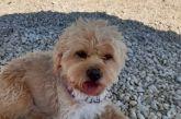Χάθηκε σκυλάκι στη Λευκάδα