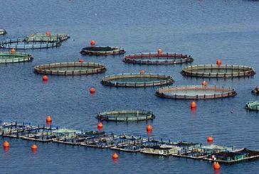 Ξανά στο «τιμόνι» της Ελληνικής Οργάνωσης Παραγωγών Υδατοκαλλιέργειας ο Απ. Τουραλιάς-