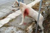 Άρειος Πάγος για κακοποίηση ζώων: Συλλήψεις και αυτόφωρο για τους δράστες