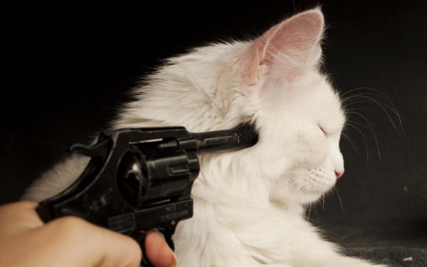 Πυροβόλησε γάτα με αεροβόλο στο Μεσολόγγι