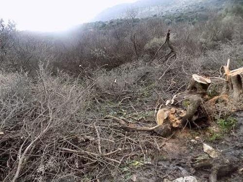 Επεισόδιο πολίτη με δασονόμο με φόντο τα πουρνάρια στην περιοχή του Θέρμου