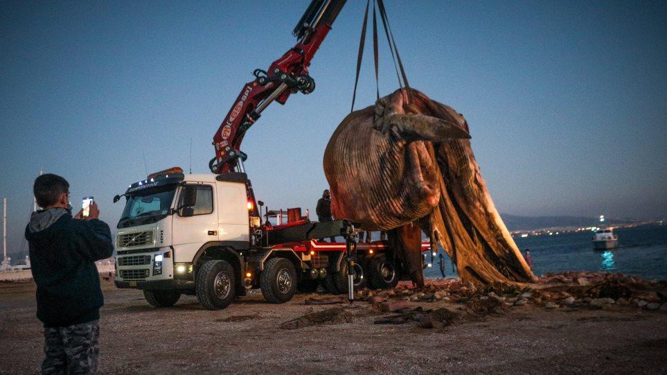 Νεκρή φάλαινα στον Πειραιά