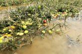 ΕΛΓΑ: Αποζημιώσεις 1,6 εκατ. ευρώ σε 1.272 δικαιούχους για τις καταστροφές του «Ιανού»