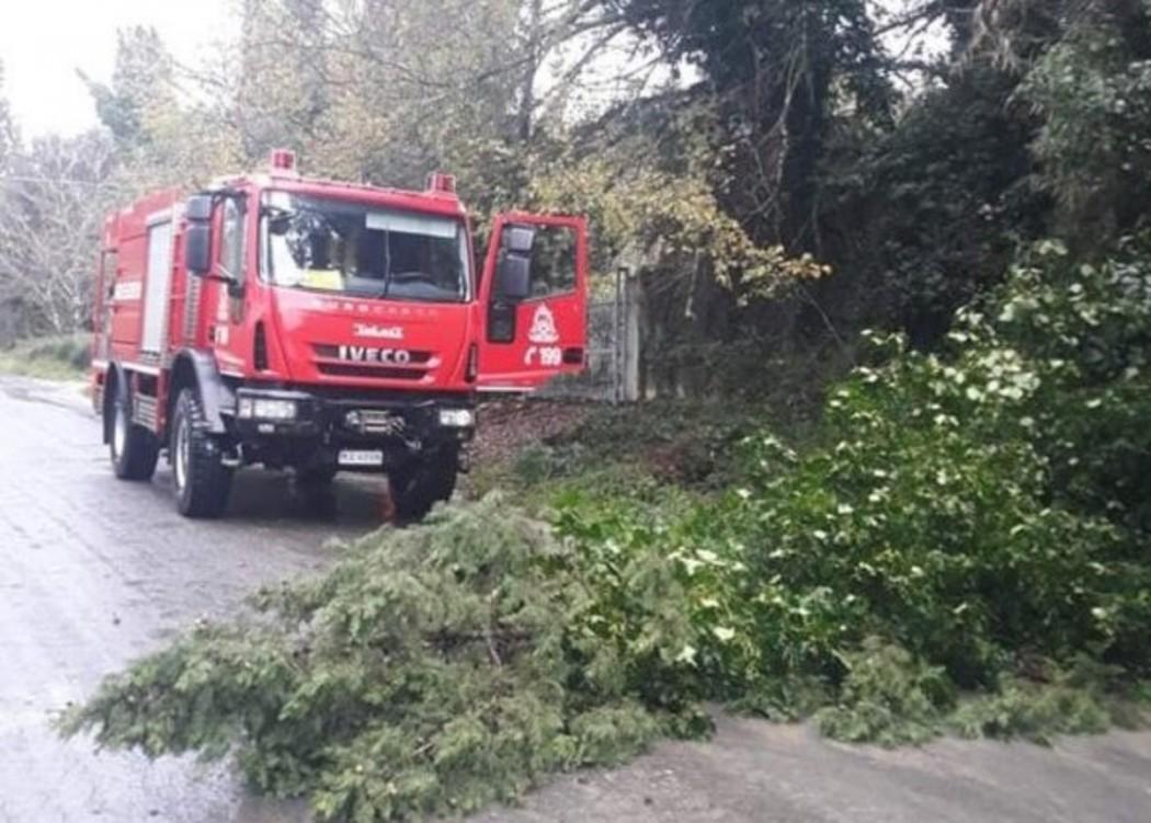 Ξεριζωμένα δέντρα από την κακοκαιρία κινητοποίησαν την Πυροσβεστική στο Αγρίνιο
