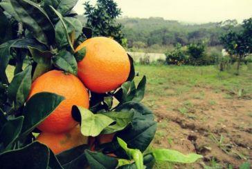 Στα δικαστήρια για 30 κλεμμένα πορτοκάλια!
