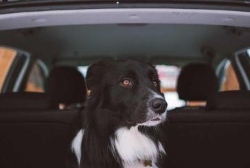 Αγρίνιο: τυχερός μέσα στην… ατυχία του στάθηκε σκύλος που έπεσε απο όχημα