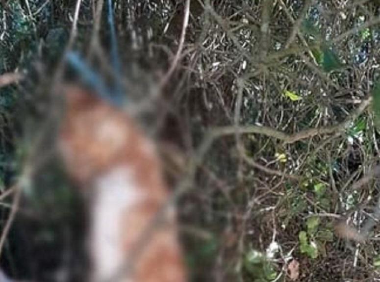 Φρίκη στην Κομπωτή Ξηρομέρου: Άγνωστος κρέμασε γάτα σε δέντρο
