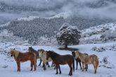 Κακοκαιρία Λέανδρος: μαγεύει στα λευκά ο Ορεινός Βάλτος