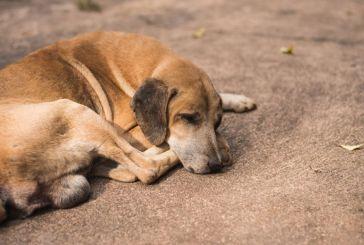 Το μήνυμα της Αντιδημάρχου Αμφιλοχίας, Σοφίας Ανδρίκουλα για την Παγκόσμια Ημέρα Αδέσποτων Ζώων