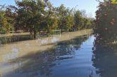 Απέραντη λίμνη ο κάμπος Οινιάδων λόγω βροχοπτώσεων, ανάστατοι οι αγρότες για τις καλλιέργειες