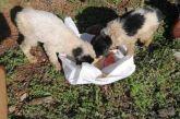 Σε άθλια κατάσταση, κλεισμένα σε τσουβάλι βρέθηκαν σκυλάκια στην Παραβόλα