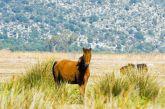 Βίντεο: Τα άγρια άλογα στο Λούρο Αιτωλοακαρνανίας