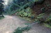 Τώρα στο αλσύλλιο του Αγ. Χριστοφόρου πετάνε και… δέντρα στο έδαφος!