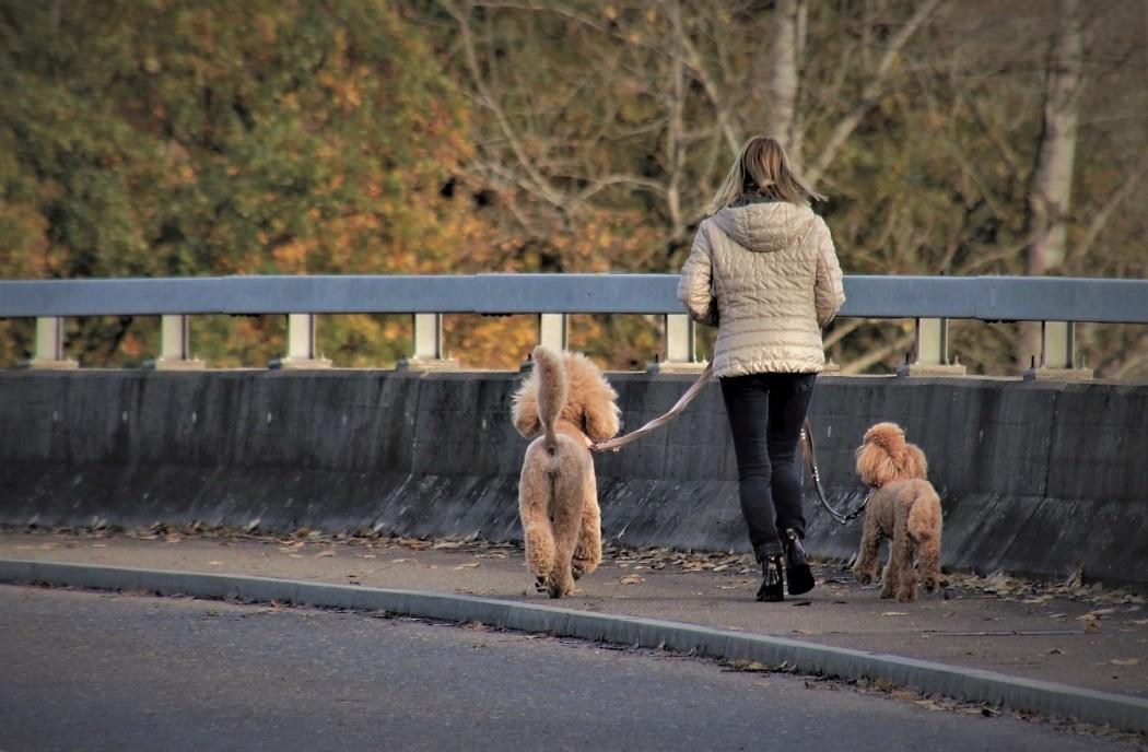 Αστυνομία: Αν βγάζεις βόλτα τον σκύλο χωρίς λουρί το πρόστιμο είναι 300 ευρώ
