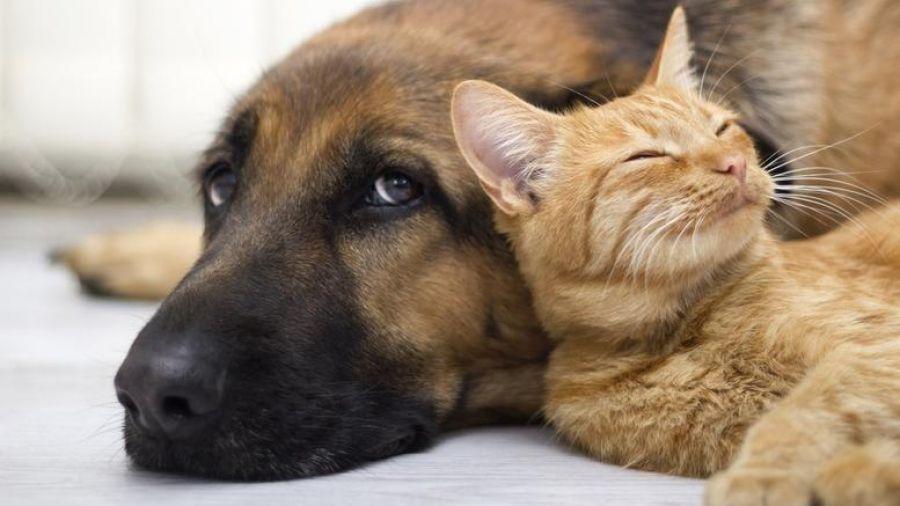 Ζώα συντροφιάς: Υποχρεωτική στείρωση, ελεγχόμενη αναπαραγωγή και αυστηροποίηση προστίμων