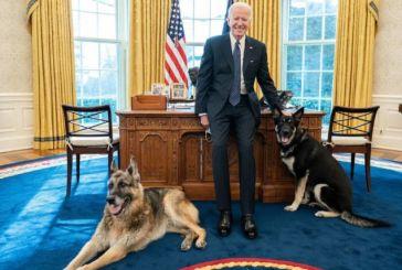 O σκύλος του Μπάιντεν ξαναδάγκωσε υπάλληλο στον Λευκό Οίκο!