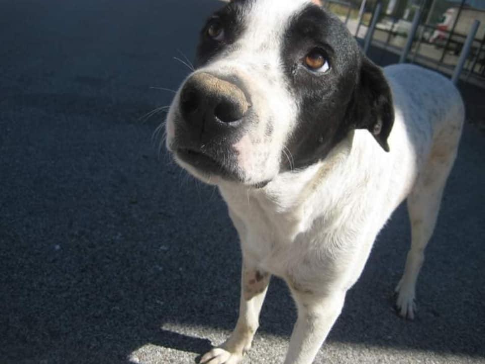 Παρέμβαση του αρχηγού της ΕΛΑΣ για το θάνατο της αδέσποτης σκυλίτσας στο Αγρίνιο