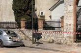Λέκκας: Fake news τα περί επερχόμενου μεγάλου σεισμού στην Ελασσόνα
