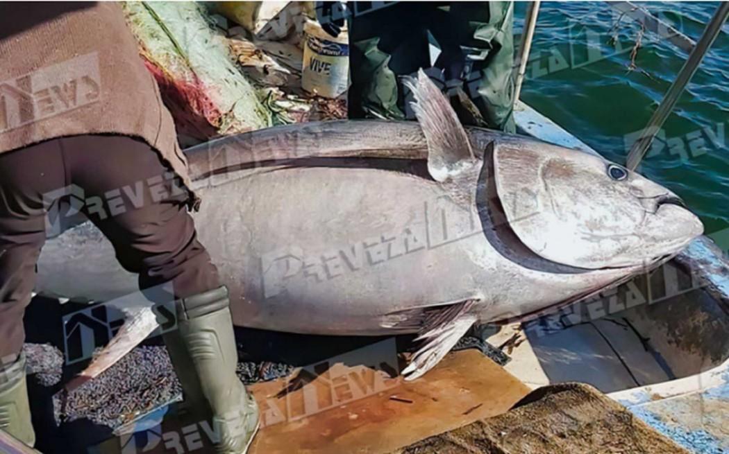 Πρέβεζα: Δεν είναι μοντάζ αλλά το… ψάρι που έπιασαν