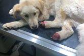 Μήνυση της Φιλοζωικής για σοκαριστικό περιστατικό με σκυλάκι στο Αγρίνιο