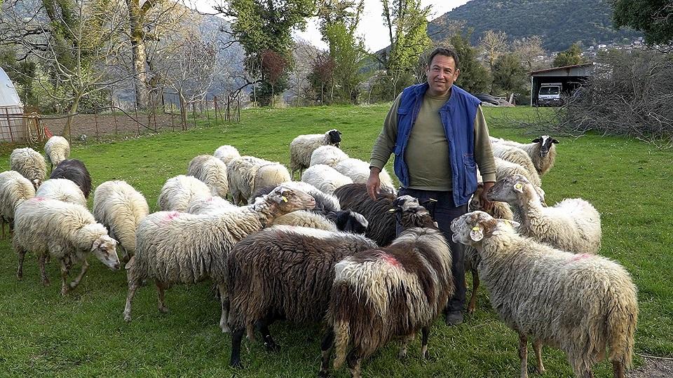 Η βιοπάλη του Μιχάλη: έτσι είναι η ζωή ενός κτηνοτρόφου στα χωριά μας (βίντεο)
