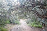 Οι θέσεις της Λαϊκής Συσπείρωσης Aγρινίου για τους δασικούς χάρτες