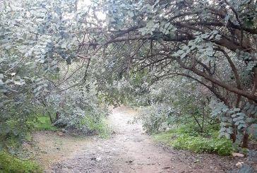 Οι προτάσεις της ομάδας εργασίας του ΤΕΕ Αιτωλοακαρνανίας για τους δασικούς χάρτες