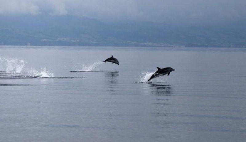 Ναύπακτος: Δελφίνια «παίζουν» πολύ κοντά στην παραλία της Ψανής (βίντεο)