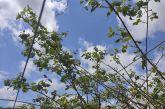 Ζημιές από το χαλάζι σε καλλιέργειες της Γουριώτισσας