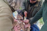 Ο Φ/Δ Λιμνοθάλασσας Μεσολογγίου – Ακαρνανικών Ορέων απελευθερώνει γύπες με αφορμή την έξοδο του Μεσολογγίου