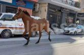 Άλογο έτρεχε μόνο του στο κέντρο της Λάρισας