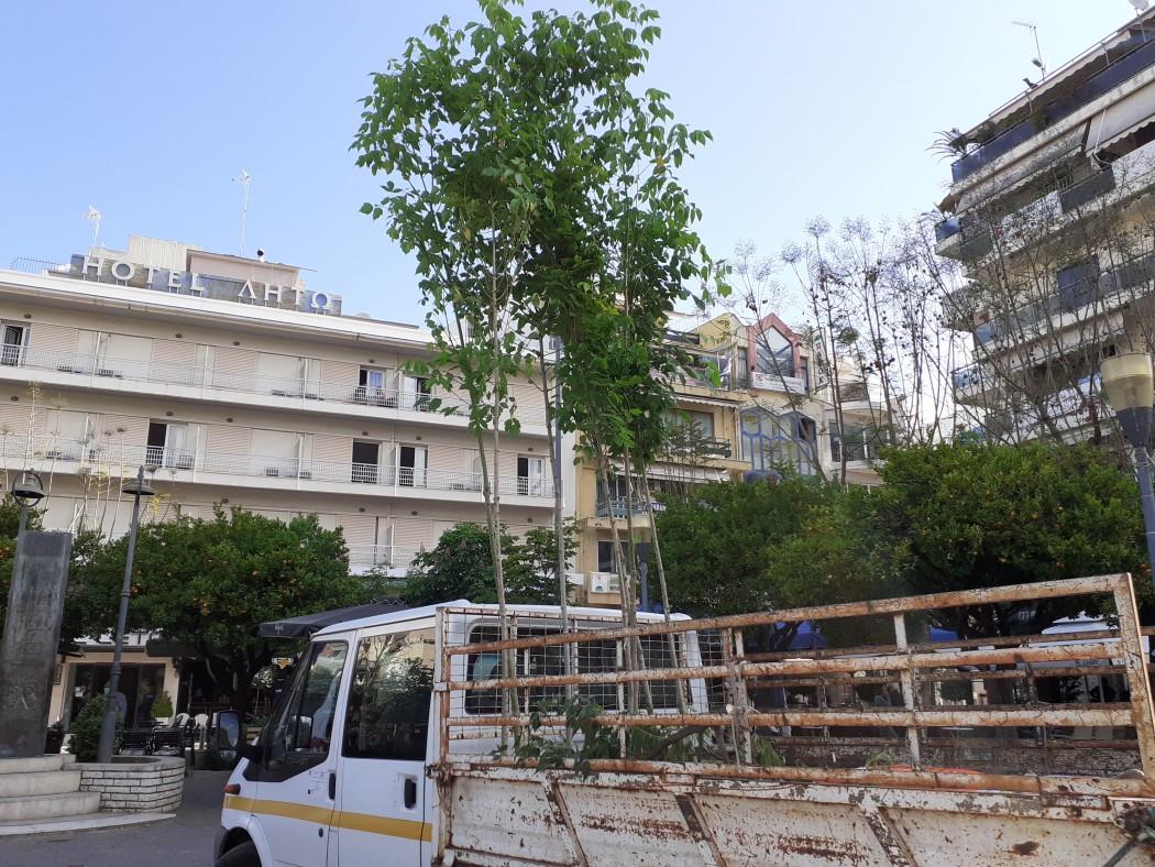Αγρίνιο: Αντικαταστάθηκαν τα δέντρα που είχαν καταστραφεί στην πλατεία Δημοκρατίας (φωτο)