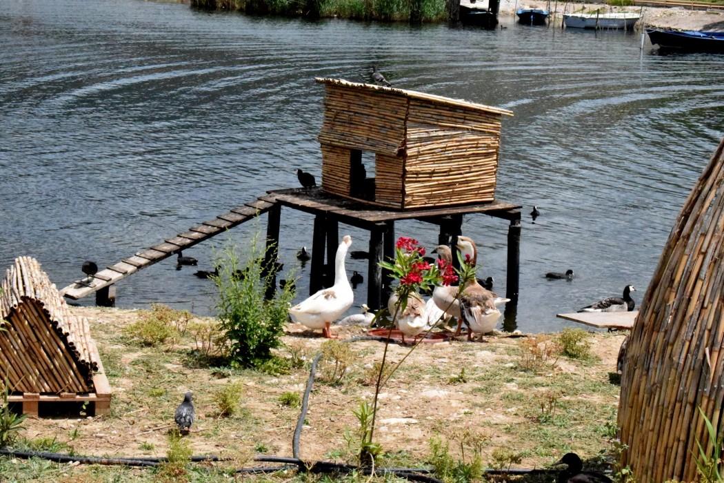 Αξιέπαινη πρωτοβουλία στο Αιτωλικό: Ο κολπίσκος που έγινε καταφύγιο υδρόβιων πτηνών