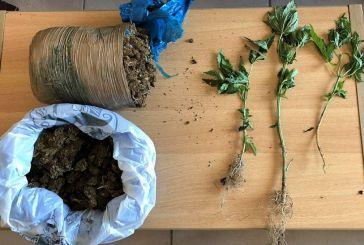 Βόνιτσα: έρευνα σε σπίτι για ναρκωτικά, βρέθηκαν χασίς και δενδρύλλια- μια σύλληψη